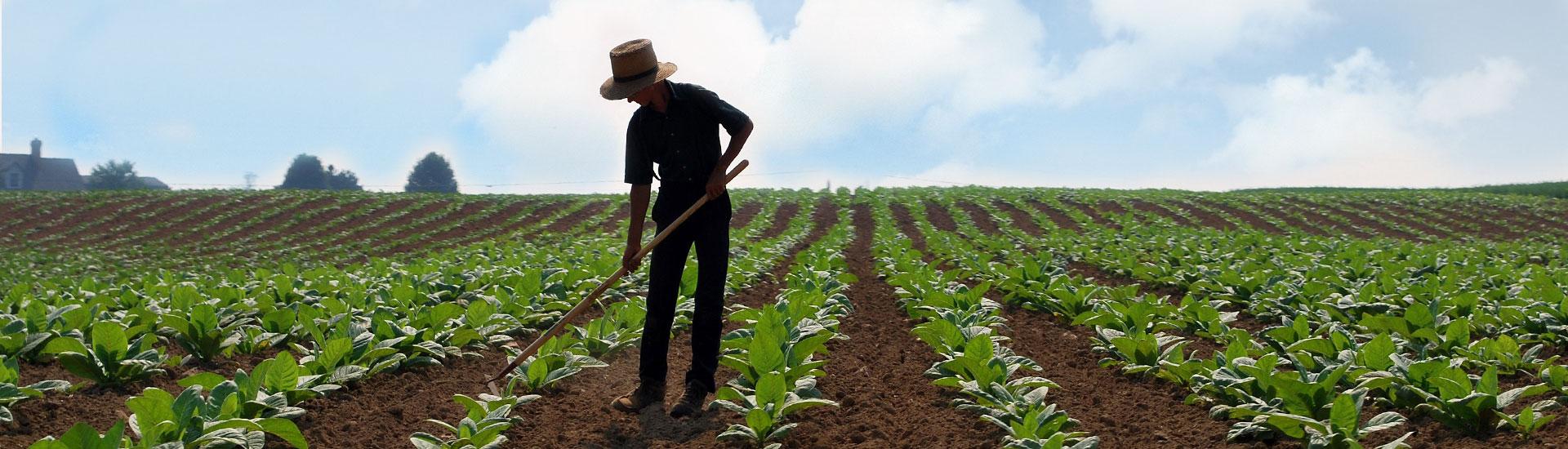 Büyük aileler için arazi: belgeler ve kayıt